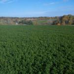 Alfalfa's Amazing Health Benefits and More