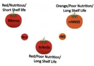 Figure 4 Hybrid Produce