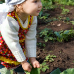 Why Grow Your Own Organic Food?