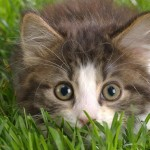 Indoor Gardens and Cats: Keeping Your Pets Out of Your Crops
