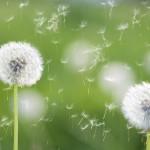 Beat Seasonal Allergies Naturally