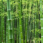 What's the Deal With Bamboo? Green or not?