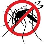 How to Deal with Mosquitoes Naturally
