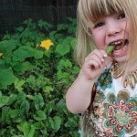 New Study Shows Children Should Eat Organic to Reduce Pesticide Levels