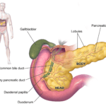 Diabetes, Endocrine Functions of the Pancreas, and Natural Healing