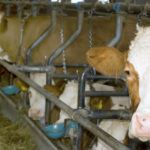 The True Cost of Industrialized Meat Production – And What You Can Do About It