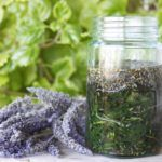 Lavender: A Portrait of an Overlooked Panacea