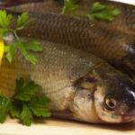 Safe Fish to Eat and the Fish to Avoid