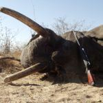 Trump Is Lifting Ban on Importing Elephant Trophies from Africa