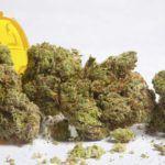 Less Opioid Prescriptions Where Marijuana Is Legal