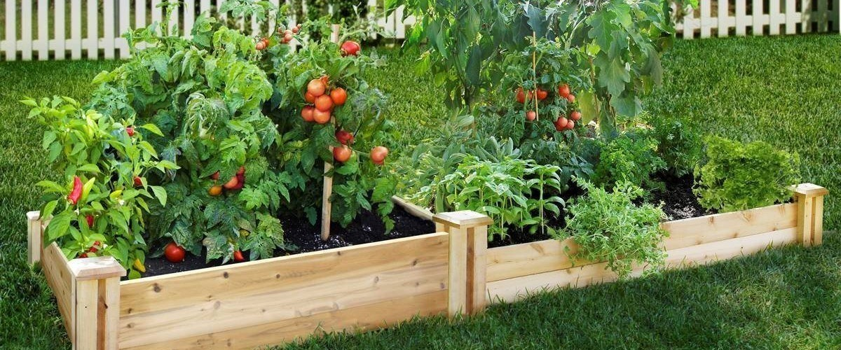 How To Start A Vegetable Garden How To Grow Vegetables